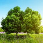 В Таганроге отмечается Всемирный день охраны окружающей среды